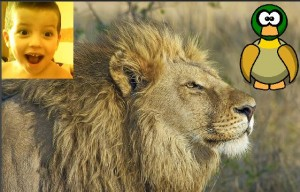 achraf lion canard